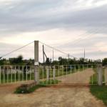 Буковинцев призывают принимать меры, чтобы не допустить случаев африканской чумы