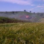 На Буковине вспышка африканской чумы. В трех селах объявлен карантин