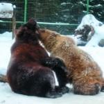 В медвежьем санатории – не без курортных романов…